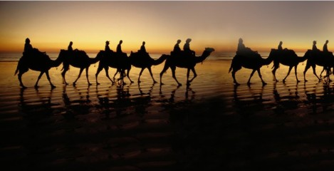 wallpaper_camel_desert